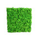 2019 home decoration Preserved moss wall customizable hot Items