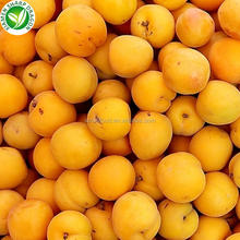 IQF Cut into Half Organic Frozen Apricots Fruits