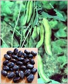 semillas impotentes en tamil