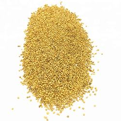 Wholesale Yellow Millet Bird Seeds for Bird Feed
