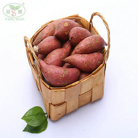 SWEET POTATO Professional exports to Singapore, Malaysia, Thailand, the Philippines and so on