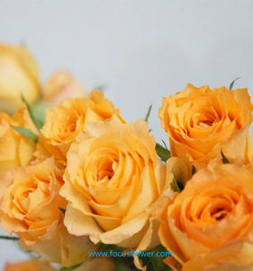 fresh golden roses for valentine's day