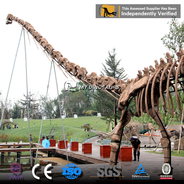 MY DINO-SF58 Simulation Skeleton Model of Diplodocus and Apatosaurus