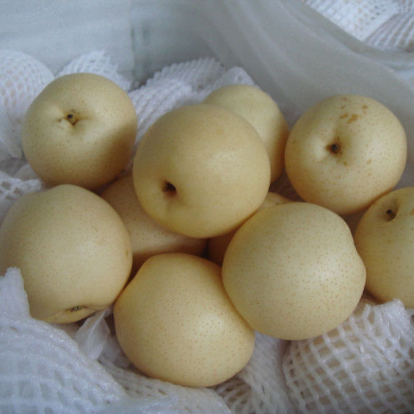 Fresh Golden Pear 2020 Crop