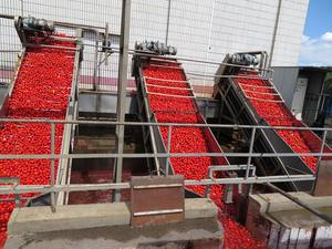 Tomato paste in brix:28-30% in drum packing