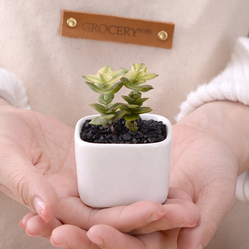Simple rounded square mini fleshy plant ceramic flower pot