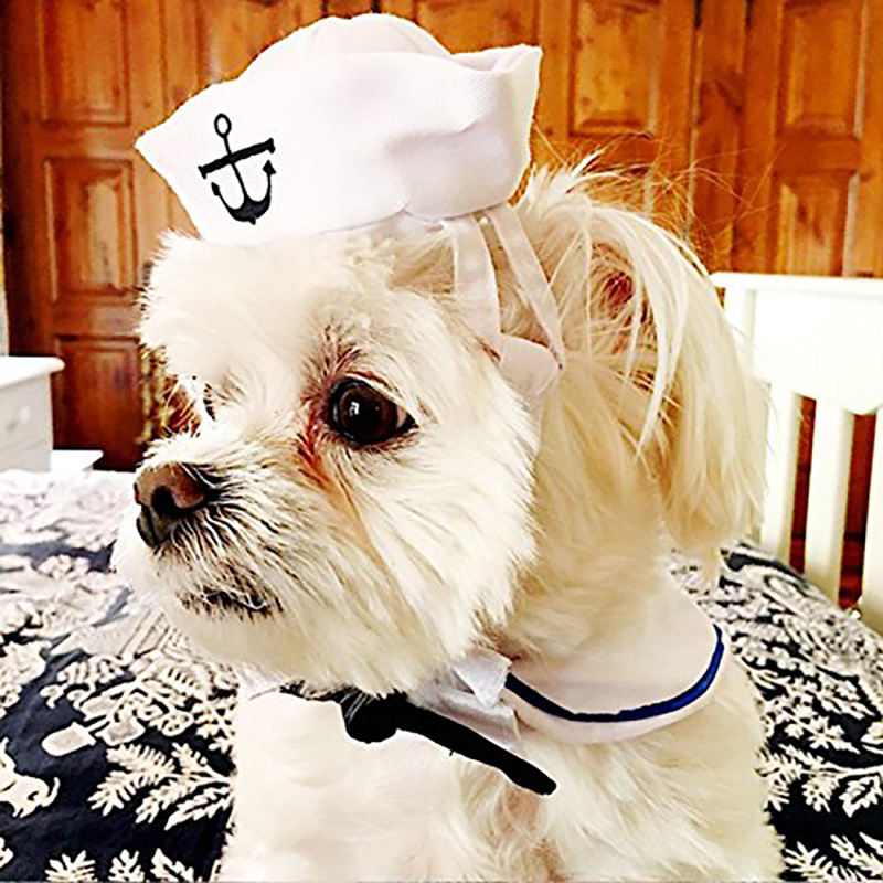 Cat Dog Sailor Costume Cat Sailor Outfit Navy Hat Cats Dogs Costume For Halloween Christmas Party