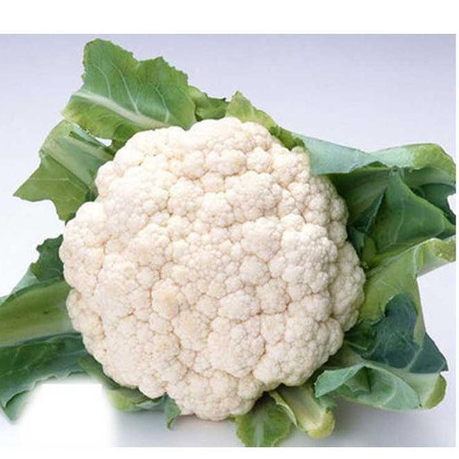 Suntoday плотная белая Индия посадка 75 дней cauliflower гибридные семена