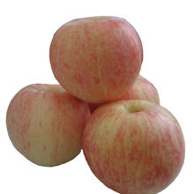 China wholesale fresh royal gala apple