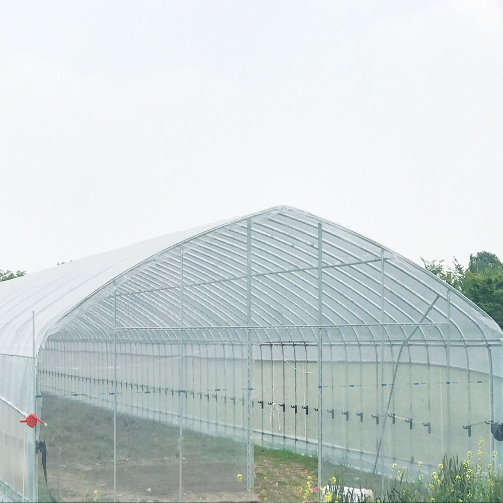 Large Plastic Agricultural Greenhouse PE flim Hot Sale