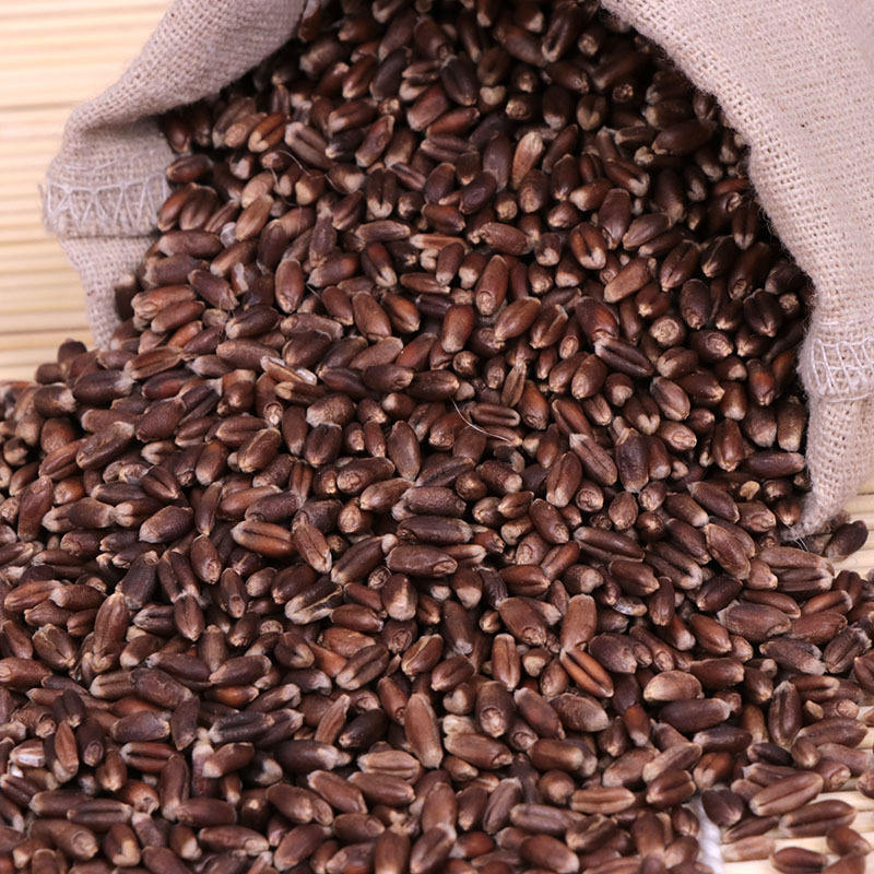 2020 High Yield Hybrid Black Wheat Seeds For Sowing