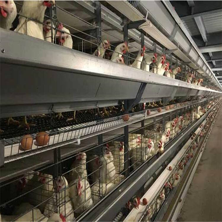 Supply Completely Automatic Laying Hen/Egg Layer Battery H Type Chicken Cages System