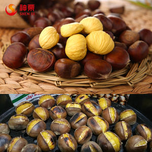 Bulk Fresh Chestnut best tasting frozen foods