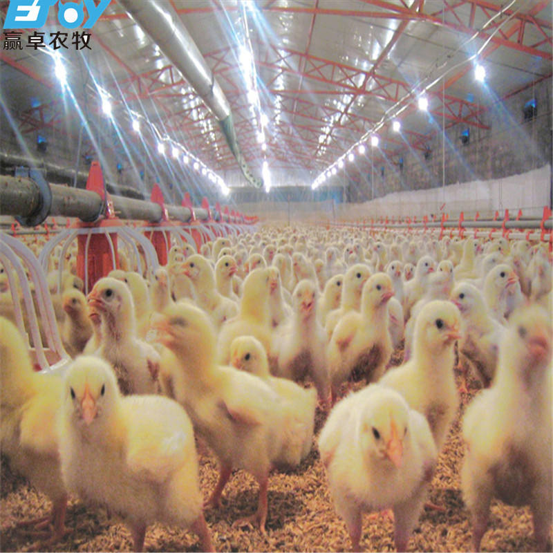Fully Automatic Broiler Feeding Equipment System For Poultry Farm