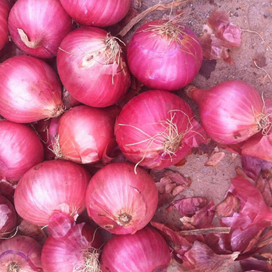 China Exporting Onion
