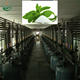 Stevia Sugar Plant/Stevia Sugar Extraction Machine in Stevia Sugar Production Line