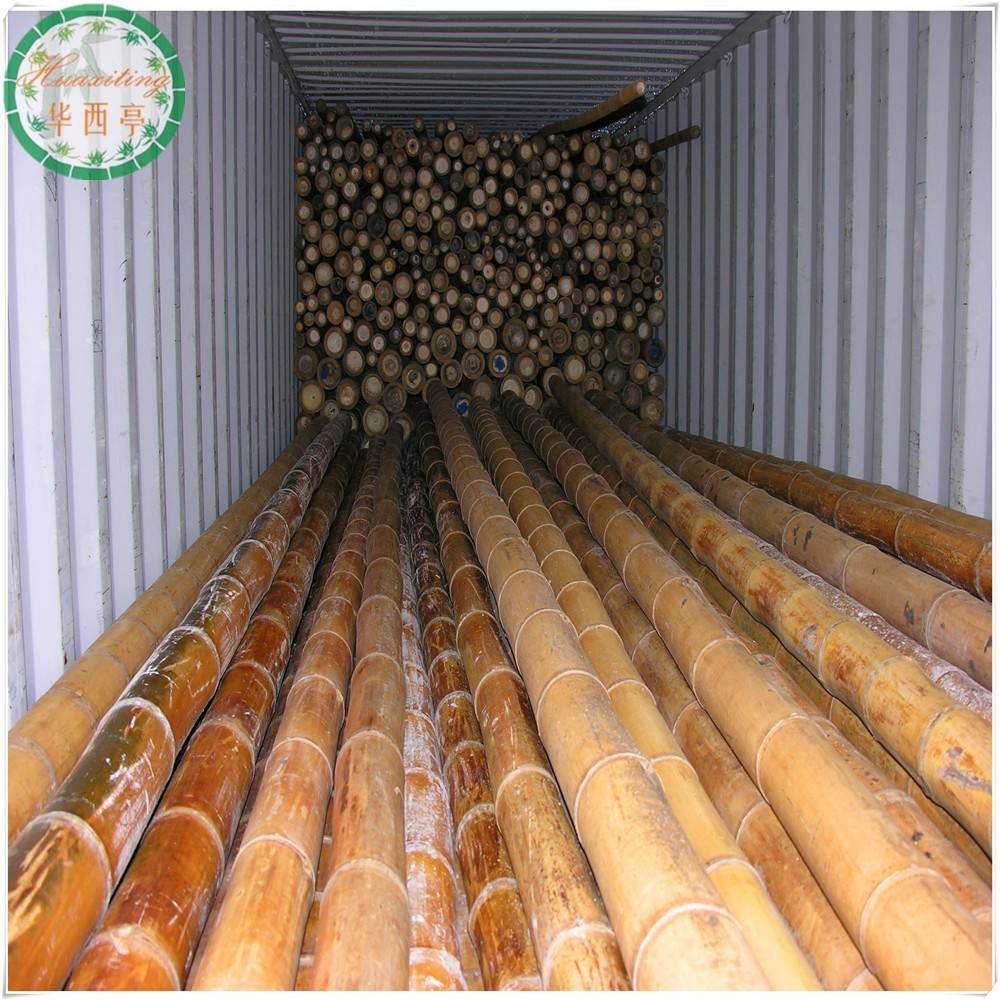 large bamboo sticks poles