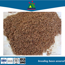 image freeze dried bloodworms fish food blood worms