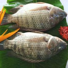 Frozen tilapia fish price