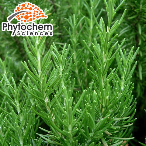 Good benefits rosemary leaf extract 2.5% Rosmarinic Acid by HPLC for skin care