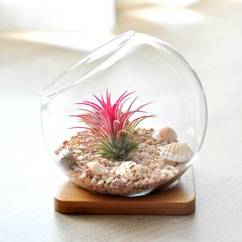 Hand made mouth blown glass terrarium with wood stand