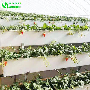 Agriculture Strawberry Vegetable Hydroponics Growing gutter Cultivation for Sale