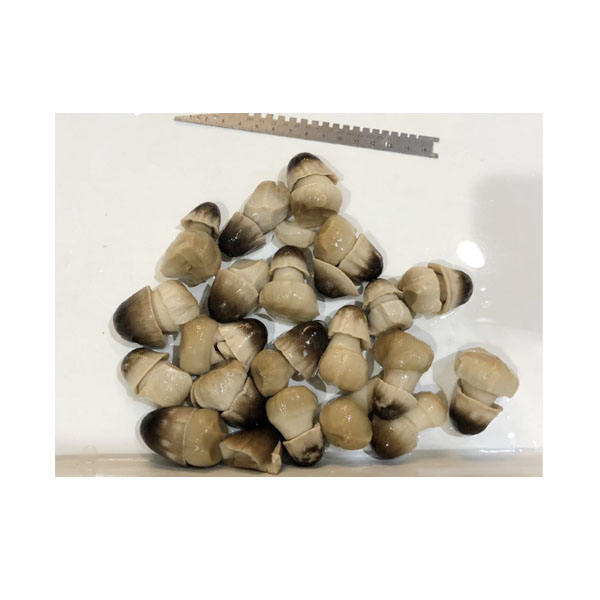Canned Peeled Straw Mushroom Whole in Brine