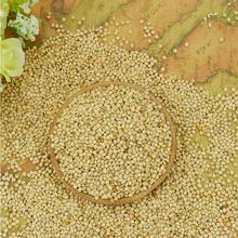 white millet with the cheapest price
