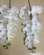 9 heads Real touch Latex fake artificial phalaenopsis orchids