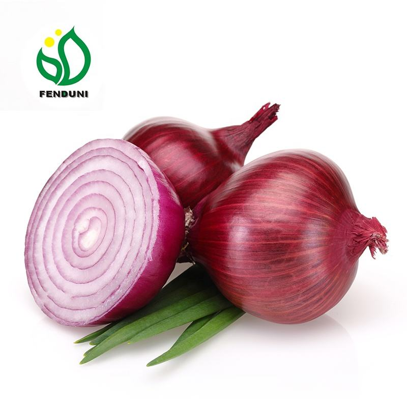 china top quality RED ONION in mesh bag supply all the year