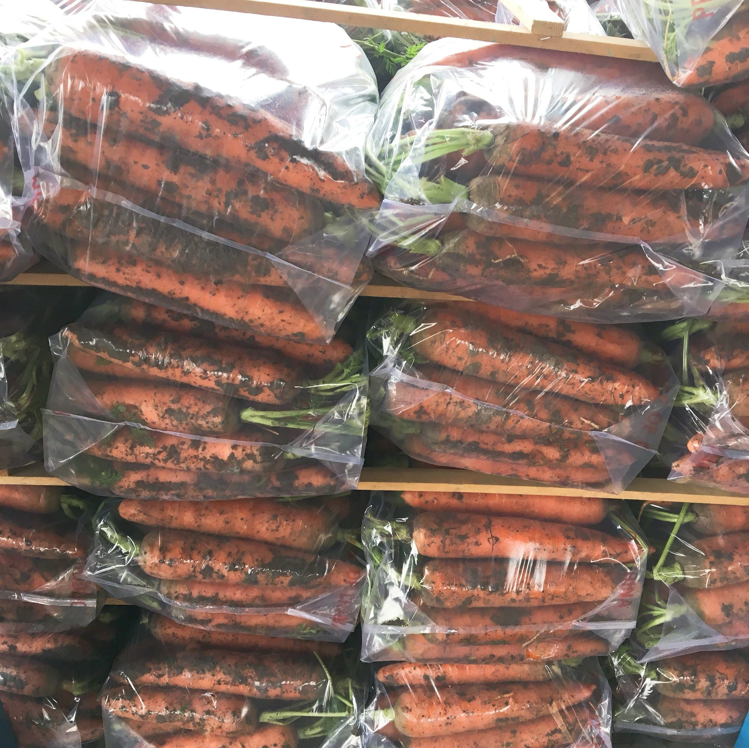 chinese fresh vegetable carrot high quality export vietnam