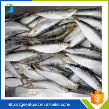 Top Quality Seafood Frozen QS Sardine Fish and best price w/r frozen sardines 8-10pcs/kg for bait