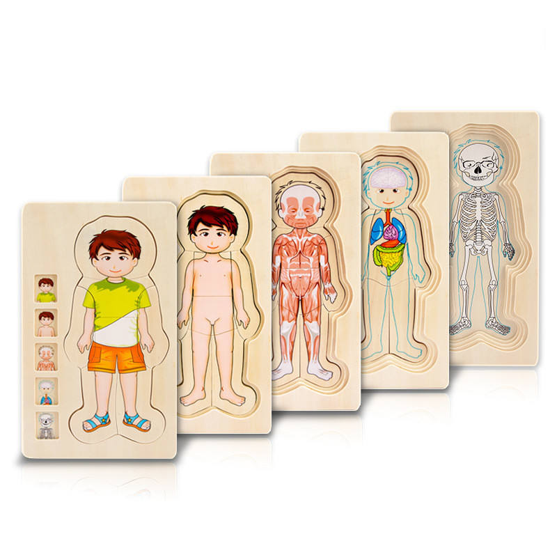 2021 Wooden Learning Educational Structure Multi-layer Wood Human Body Structure Puzzle toys for the kids to play WPT33