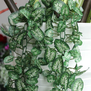 Indoor Outdoor Plants Indoor Outdoor Plants Suppliers And