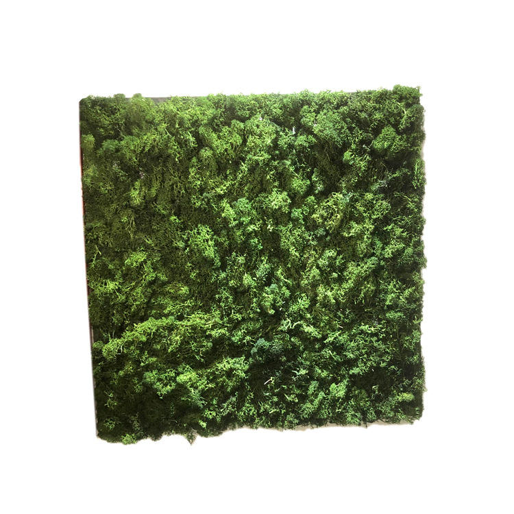 2019 New Idea Product Preserved Artificial Moss Wall