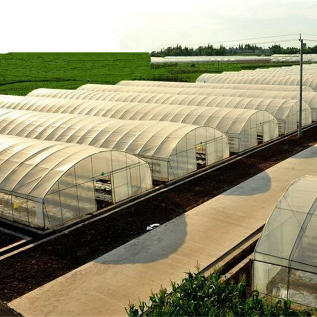 Economic PE Film Horticultural Single Tunnel Greenhouse For toamto and Cucumber