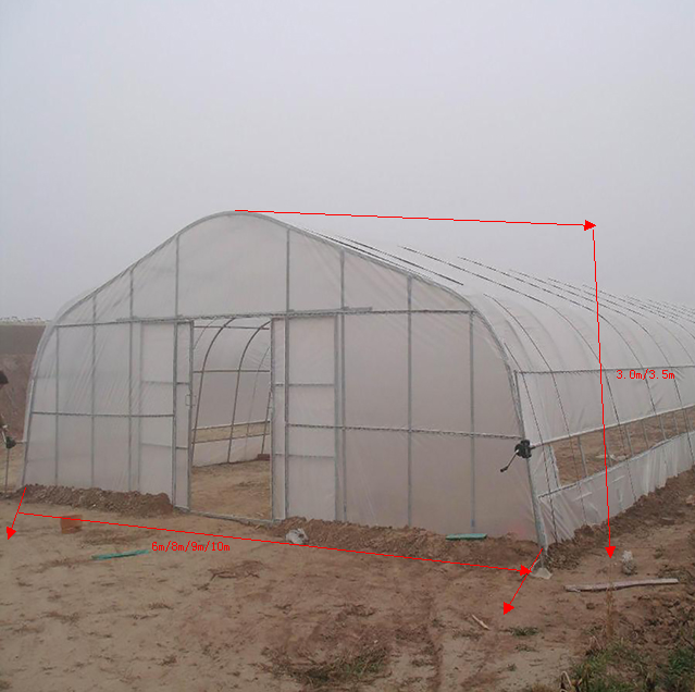 single-span Greenhouse for vegetables, Plastic greenhouse, Low cost
