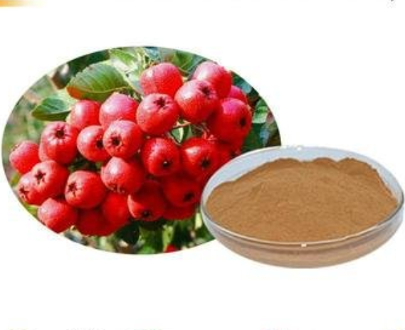 GMP Certificate Popular Herbal Plant Extract Hawthorn