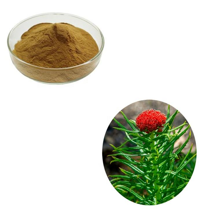 Ready To Ship Standard Rhodiola Rosea Extract 10:1 for Sexual Wellness Enhancement
