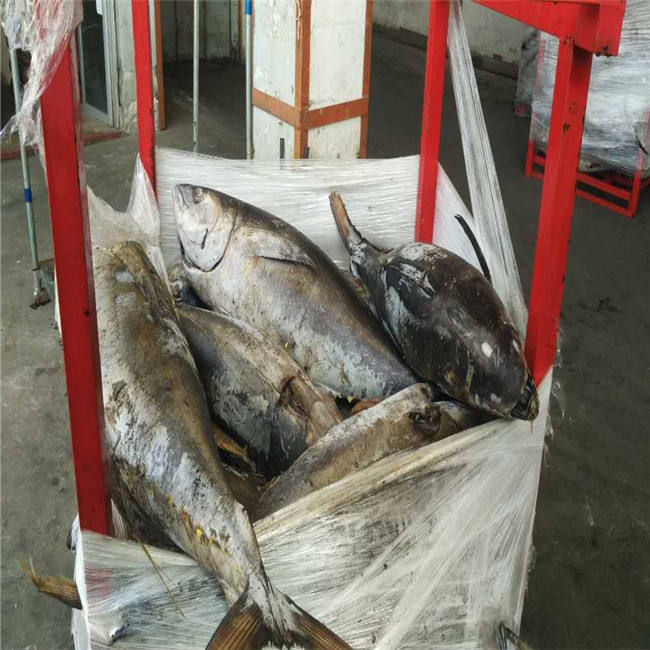 Hot selling Frozen Fresh Yellowfin Tuna with Top quality