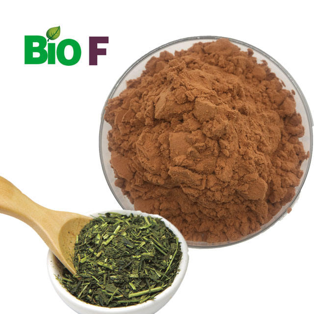 BIOF Brand Focus Herb Extract Organic Green Tea Extract