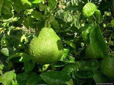 Douce chinoise pomelo