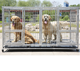 Metal Heavy Duty Dog Cage for Large Dogs and Pets Durable & Strong Dog Crate w/Feeding Doors and Divider or Additional Tray