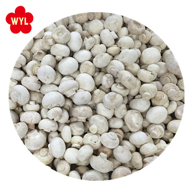 2020 Best Price IQF Frozen Champignons / White Mushroom