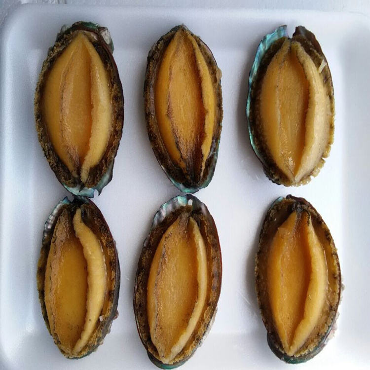 READY TO EAT COOK ABALONE CANNED 400g 4PCS/CAN canned abalone for sale Canned Abalone of Mexico with Good Taste