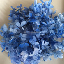 Fresh Real Touch Beautiful Immortal Hydrangeas Preserved Hydrangea for Wedding