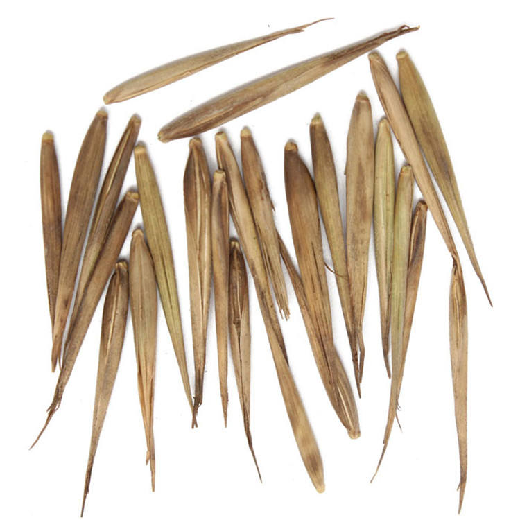 Wholesale Zi Zhu Chinese Black Bamboo Seeds