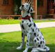 The Life Size Lovely Fiberglass Resin Dog Statue For Garden Decoration