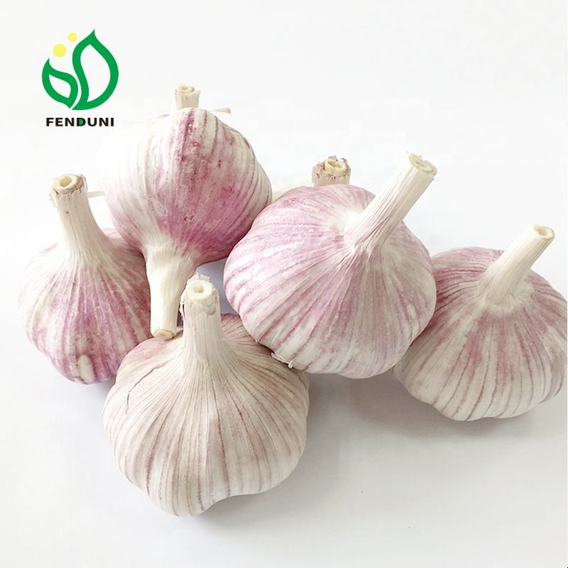 Chinese fresh natural garlic supplier in different size