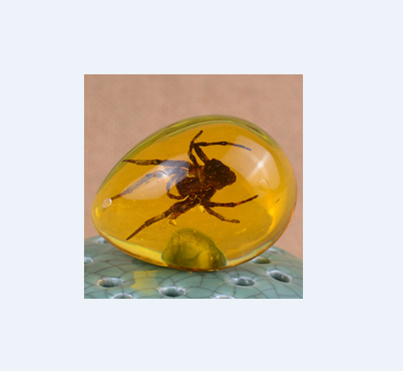 art collections 5cm spider in amber insects specimen